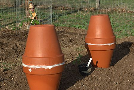 """Homemade """"ollas"""", to be buried in the garden and filled with water through hole in top.  Water seeps through clay as vegetables draw moisture from soil.  Conserves water and time spent watering!  Link explains how to do."""