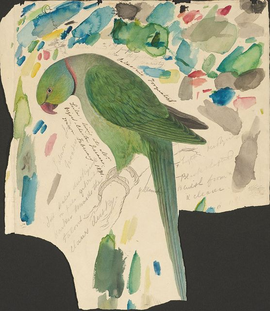 """Edward Lear Sketches of Parrots Relating to 'Illustrations of the Family of Psittacidae, or Parrots' (1832), ca. 1830 (MS Typ 55.9). Houghton Library, Harvard University. Green parrot : ink, graphite and watercolour drawing. 33.7 x 29.2 cm. Inscribed : """"Palaeornis Torquatus. Leila: living at Mr. Vigor's – Chester Terrace. drawn February 1831."""""""