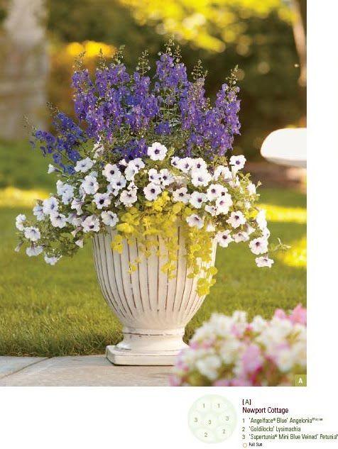 Best 25 Gardening For Dummies Ideas On Pinterest Companion Planting Companion Planting Chart