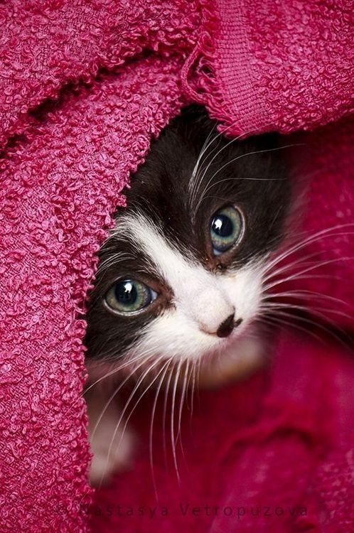 Kitten by Andrea A. Elisabeth ✿⊱╮