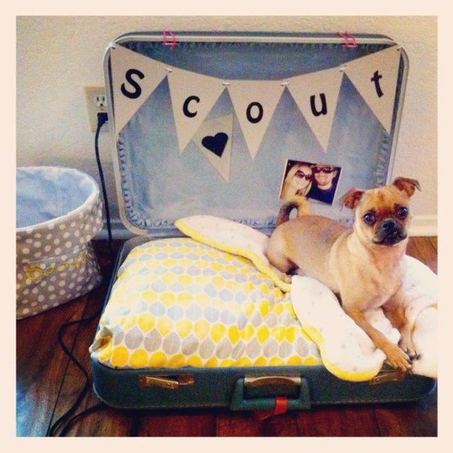 Vintage suitcase dog bed: $3 suitcase found at antique store in Mineola, Texas; pillow, pillow case & baby blanket from Target; banner made from poster board cut into 8x11 pieces and letters printed from computer, then cut into triangles & strung together with yarn; Picture of mom & dad to keep her company pinned to back ;)