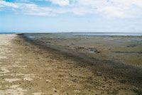 Los sedimentos acumulados en el frente deltaico sirven como sustrato para iniciar una sucesión ecológica.
