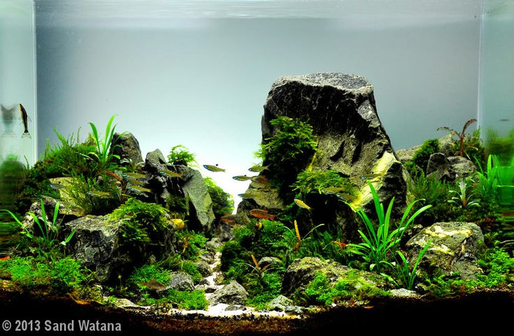 Sand Watana, 2013 AGA Aquascaping Contest