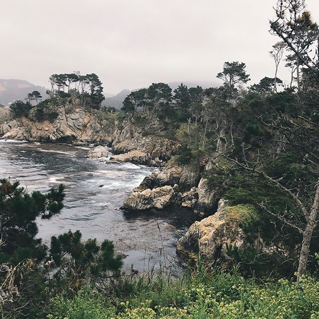 times a'tickin' to take in all the greenery that is #PNW ⌛️ #carmellocals #montereybaylocals - posted by Jennifer Lee https://www.instagram.com/parenthesesworld - See more of Carmel By The Sea, CA at http://carmellocals.com
