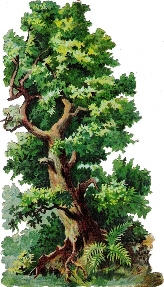 Oblaten Glanzbild scrap die cut  chromo Baum tree  Xl 23,3 cm  Farn