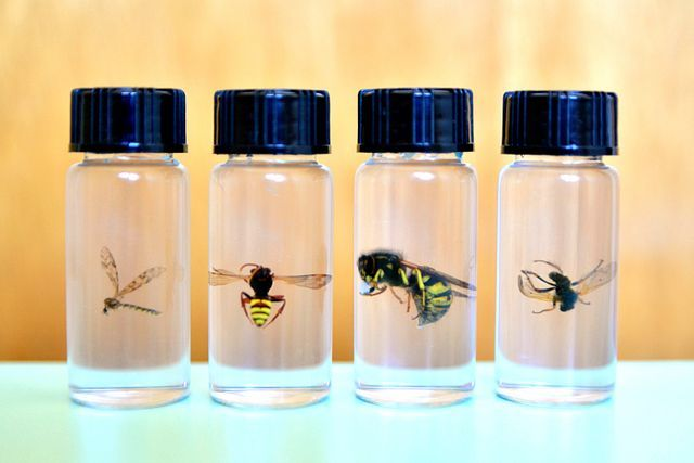 Collecting Insects Preserving Insects In Hand Sanitizer Hand