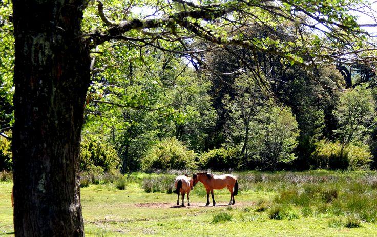 caballos, animales.