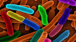 Microbes Affect Weight Loss Microbial changes in the gut contribute to a patient's ability to slim down after gastric bypass surgery.  I don't support this type of weight loss but interesting read how microbes can effect weight.