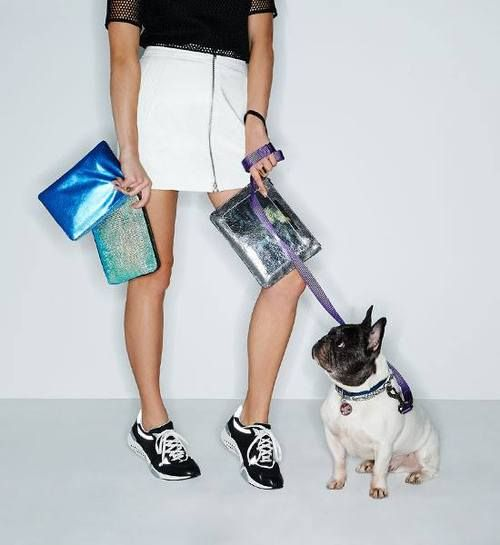 Puppies And Spring Accessories