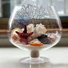 Vaso Copa de vino de Plantas Hidropónicas Terrario Florero peces Bote Contenedor hágalo usted mismo