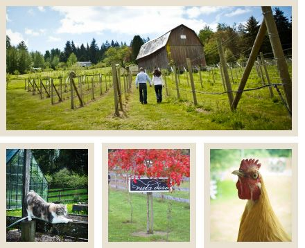 Vista D'oro Farms is a culinary agritourism destination located in South Langley, BC on ten acres overlooking Campbell Valley Park and Golden Ears Mountain Range, just 45 minutes South of Vancouver.