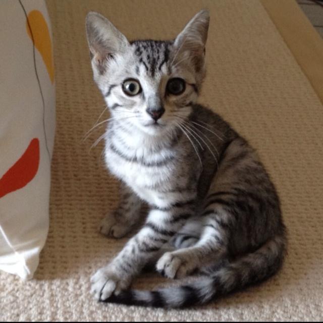 美人さんでしょ? She is so cute and smart kitty!!