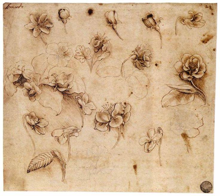 Flower study, Ink by Leonardo Da Vinci (1452-1519, Italy)