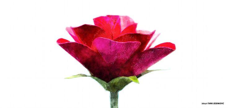 Floral Minimalism * by Tarik Jesenković on 500px