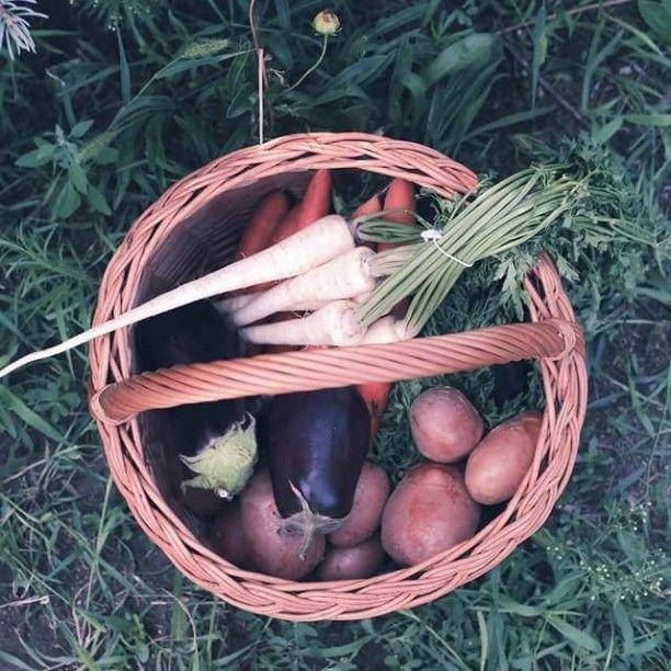 Csodaszép zöldségek gasztrofotózáson @zita_csigo kertjében és a végére a nap is kisütött :) #foodphotography #foodstyling #plantbased #foodstylist #photooftheday #veganinhungary #veganfoodshare #healthyfood #healthy #healtyeat #mik_gasztro #gasztrofoto #mutimiteszel #hungarianvegan