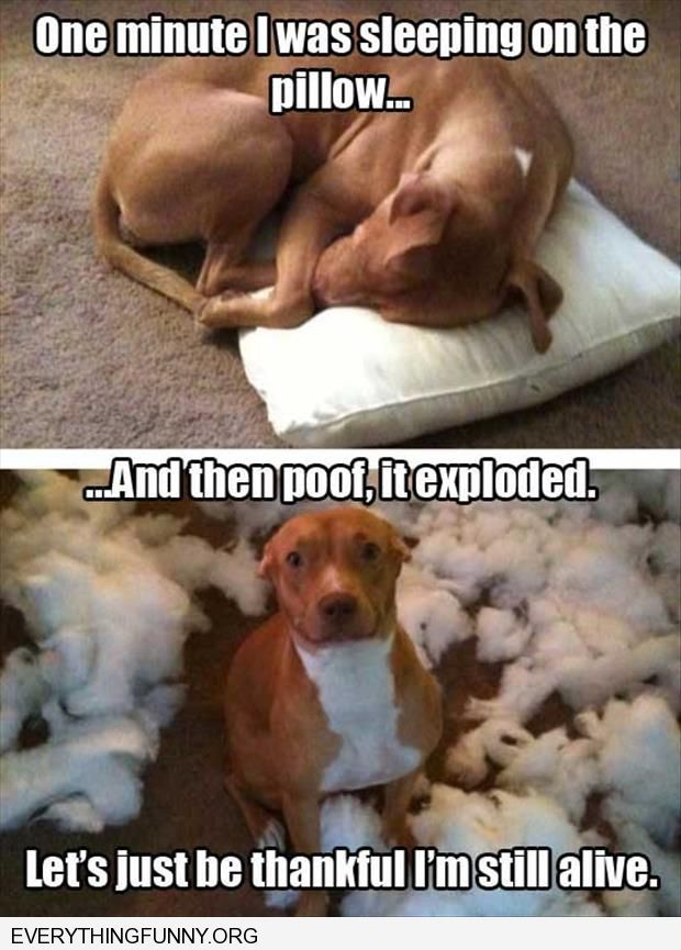 funny dog sleeping pillow pillow exploded
