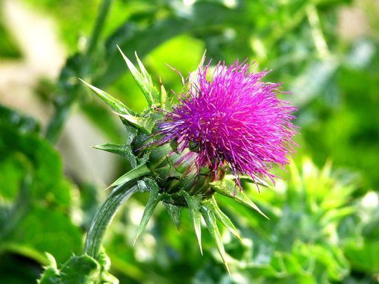 Există câte o plantă tămăduitoare pentru orice afecțiune, inclusiv pentru problema căderii părului.