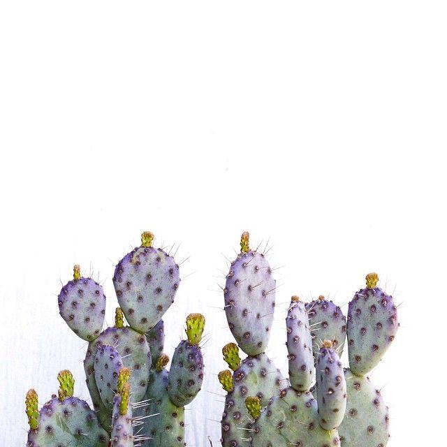 Gorgeous purple and blue cactus! Photo by Dalla Vita.