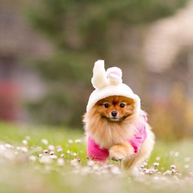 lustige verkleidung spitz hund hasenohren fasching karneval