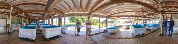 Los Cayos Dos Mosquises son dos cayos que forman parte del Archipiélago Los Roques, administrativamente forman parte de las Dependencias Federales de Venezuela, y se encuentran localizados en las Pequeñas Antillas en el Mar Caribe.. El Cayo Dos Mosquises Norte, a diferencia de otros cayos de los Roques, posee la particularidad de albergar una Estación de Investigación de Biología Marina construida en el año 1976 y manejada por la Fundación Cie...