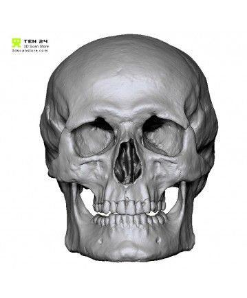 This free high resolution 3D capture of this male skull scanned using our 30 camera Agisoft photogrammetry rig. Available as .ztl and .obj.