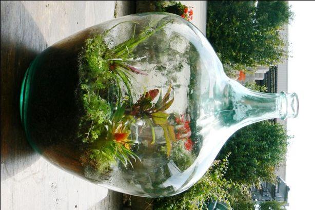 Flaschengarten