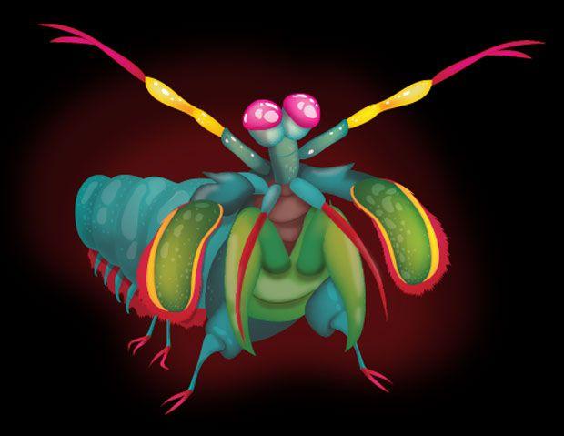 92 besten mantis shrimp Bilder auf Pinterest | Fangschreckenkrebse ...