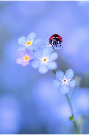 joaninha pousada numa flor