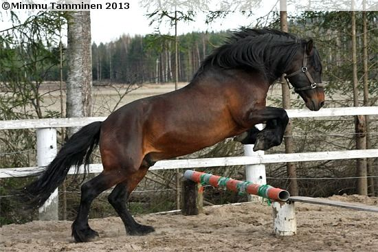 harry trotter horse breeds