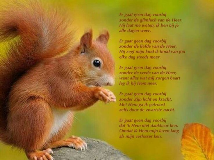 Geloof gedichten en gebeden pinterest legs and van - Geloof hars ...