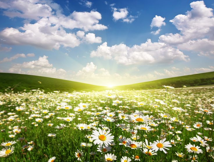 Скачать обои поле, солнце, облака, пейзаж, рассвет, ромашки, раздел цветы в разрешении 4500x3400