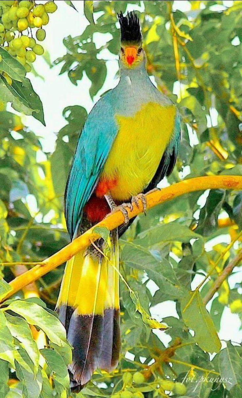 best 25 exotic birds ideas on pinterest pretty birds beautiful