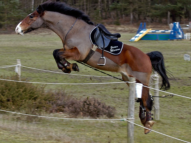 25 best images about Jump! on Pinterest | Jumping horses ...