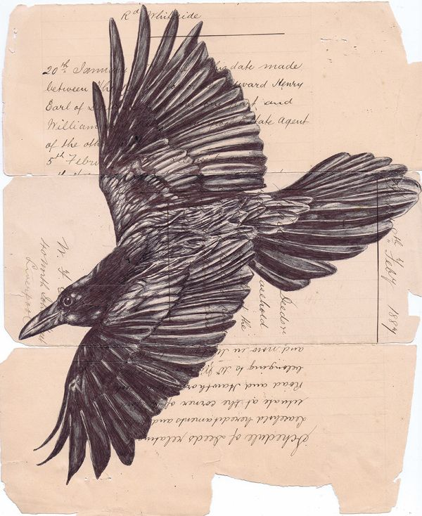 Bic biro drawing on pages from an 1887 notebook  by Mark Powell