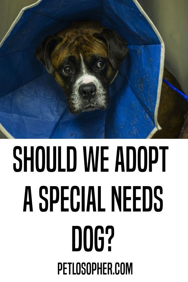 All About Rescue Dogs With Special Needs Dogs Dog Training