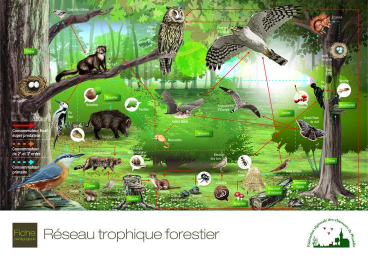 FDC 60 Fiche pédagogique Illustration