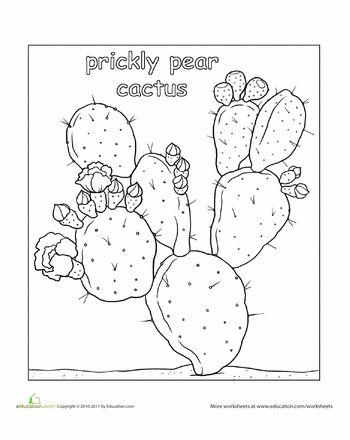 Desert Biomes For Kids Facts
