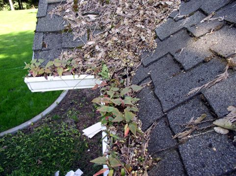 55 Best Images About Gutter Cleaning Tools On Pinterest