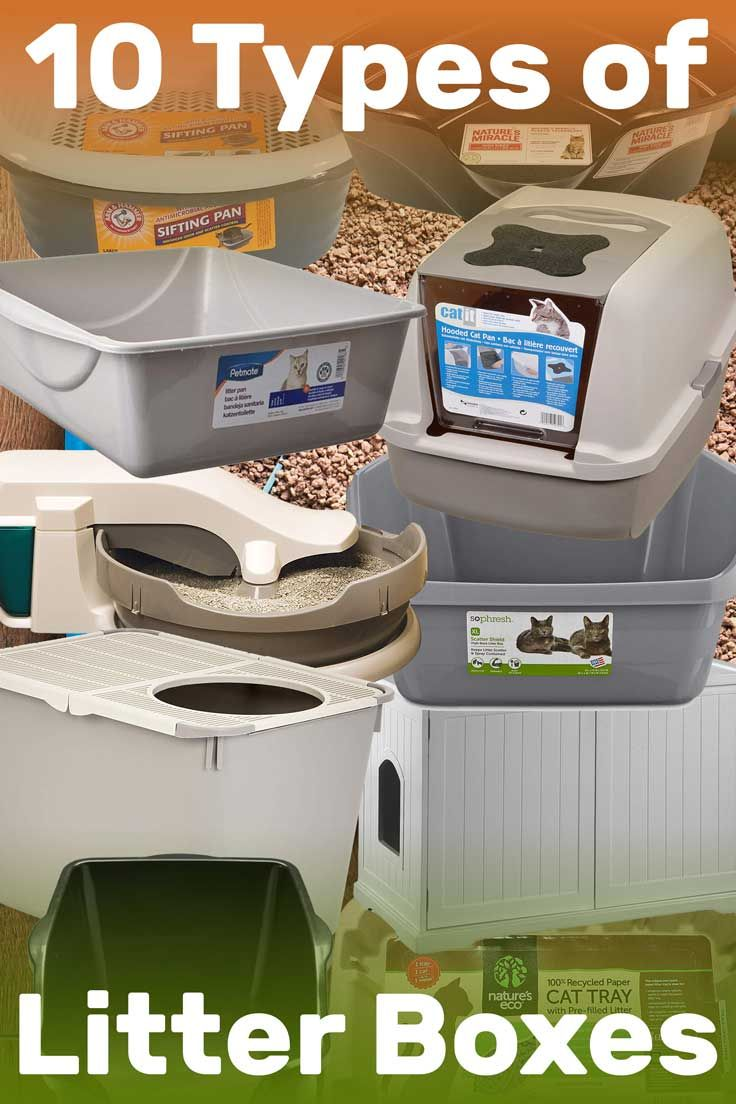 The 10 Types Of Litter Boxes Article By Litter Boxes Com Litterboxes Tcs Thecatsite Cat Cats Kitten Kittens Catsandk Litter Box Best Cat Litter Litter
