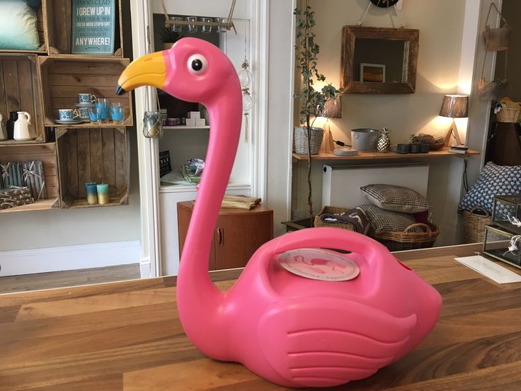 #flamingoparty #flamingo #buyonline #buygifts #homegifts #uniquegifts #watering #water #waterplants #gardening #indoorgarden #indoorplants #fungifts #juulathome #Ilfracombe #northdevon #woolacombe #bideford #onlineshopping #ukonline