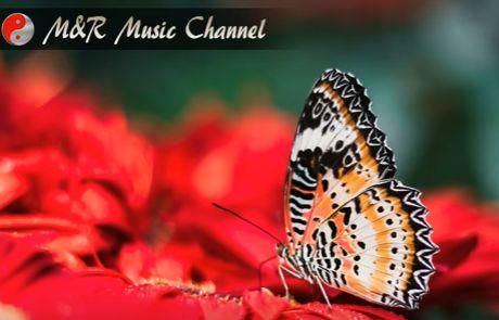 Morning Music For Harmony, Relaxation and Inspire Creativity. https://www.youtube.com/watch?v=Jku1KJhgWuY