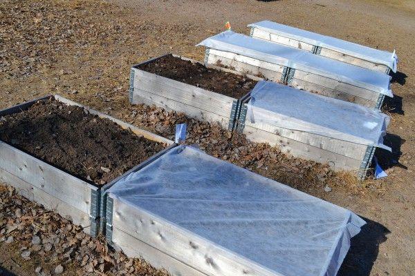 Pallkragar med fiberduk över. Nu på våren sås snabbväxande grönsaker som alla barn, oavsett ålder, kan göra själva genom att enkelt strö ut som täta mattor i lådorna (det kallas för bredsådd). Fröerna till sallat, bladkål, morot, rädisa och spenat strös helt enkelt ut över ytan och krafsas ner i jorden. Det ger mycket grönt på liten yta. Under en enkel fiberduk gror fröerna snabbt i det soliga läget. Barnen kan småsnaska på det gröna så snart det kommit upp och använda i sina lekar om de…