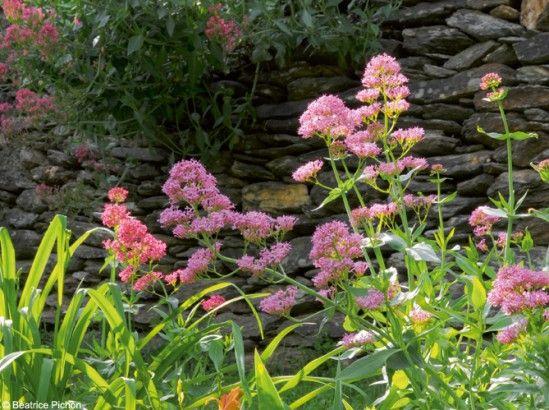 1000 id es sur le th me fleurs annuelles sur pinterest pens es graines de fleurs et zinnias. Black Bedroom Furniture Sets. Home Design Ideas