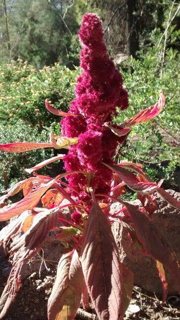 La flora del cerro san Cristóbal