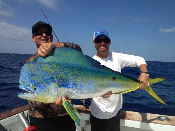 17 best images about fishing on pinterest fishing for Dolphin fishing florida