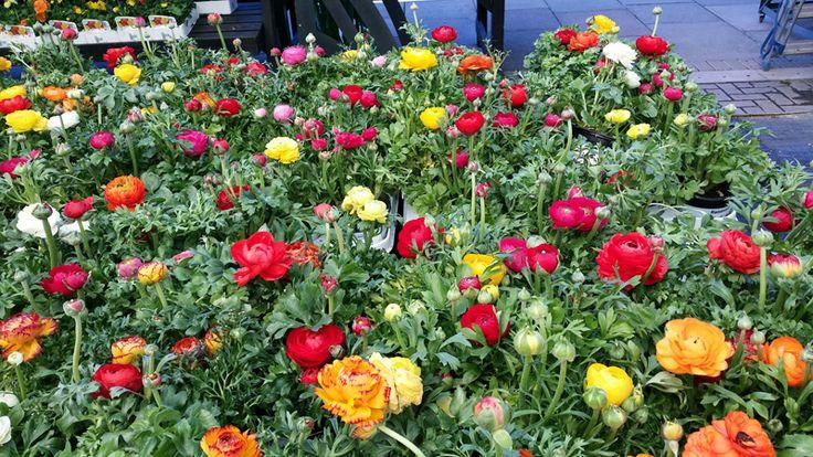 April flowers!