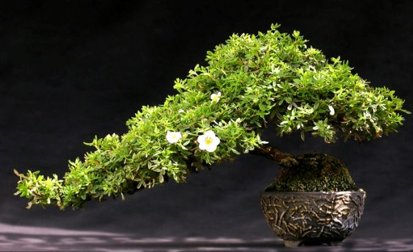 https://www.flowerwyz.com/send-plants-send-a-plant-delivery-orchid-delivery.htm  Click Here For Indoor Plants,  Indoor Plants,House Plants,Plants For Sale,Potted Plants,Indoor House Plants