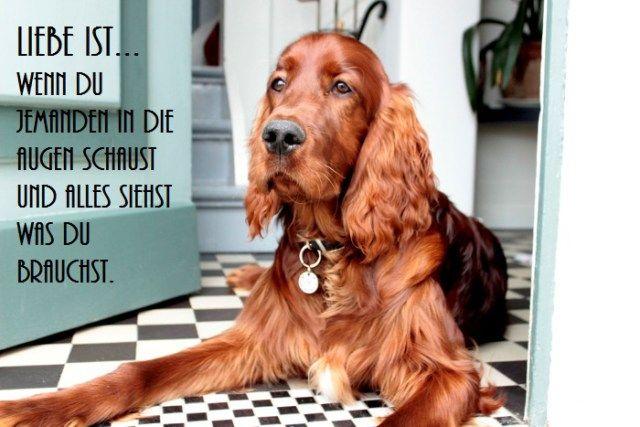 Spruchbild mit Watson #Sprüche #Hund #Sinnspruch #Statussprüche