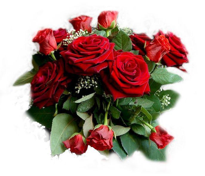 зашила розы красивые открытки для друзей внимание арсений уделяет