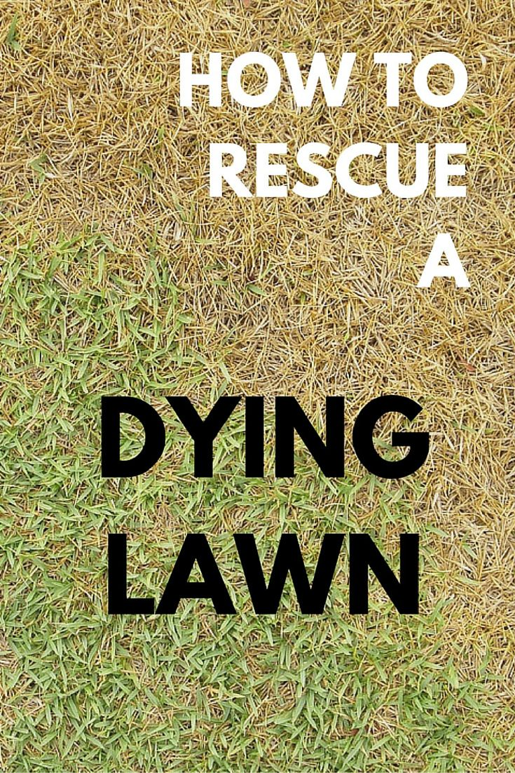 These lawn care tips will help you bring your lawn back to a healthy green.